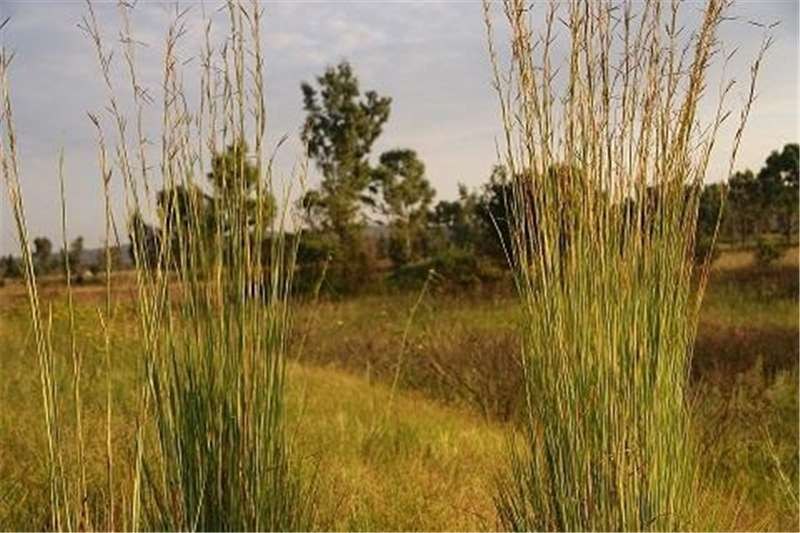 Property Vacant land Vacant Land Agricultural For Sale in Zwavelpoort A