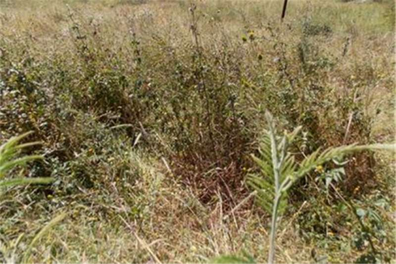 Vacant land Vacant Land For Sale  in GROOTFONTEIN COUNTRY ESTA Property
