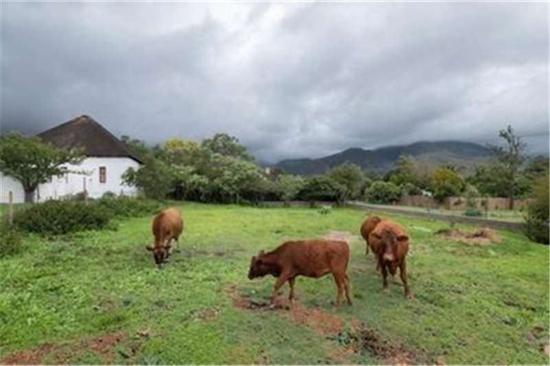 Property Vacant land Vacant Land Residential For Sale in GREYTON