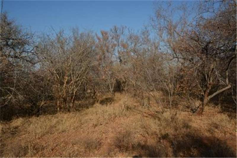 Property Vacant land Vacant Land Residential For Sale in HOEDSPRUIT WIL