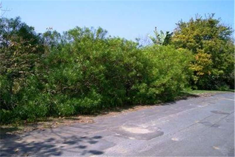 Property Vacant Land Vacant stand avaialable in Southbroom!