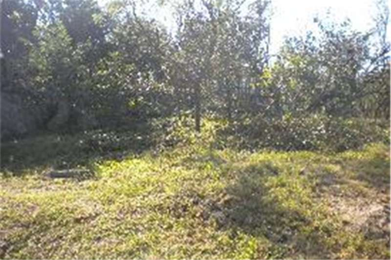 Property Vacant land Vacant Stand