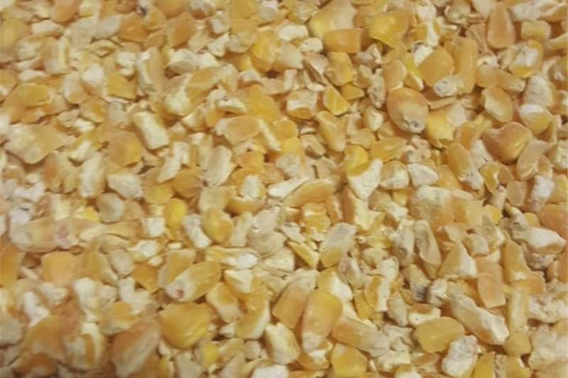 Crushed Yellow Maize For Animal Feed Seeds fertilisers and chemicals