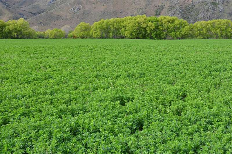 Seeds fertilisers and chemicals Lucerne , Kikuyu , Evergreen Shade Mix, Eragrostic