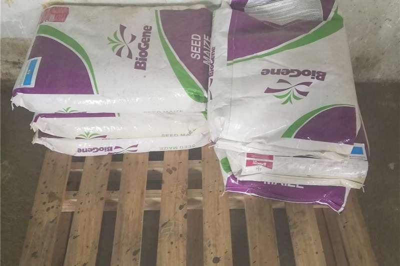 Seeds Fertilisers and Chemicals Pannar BG 4585B