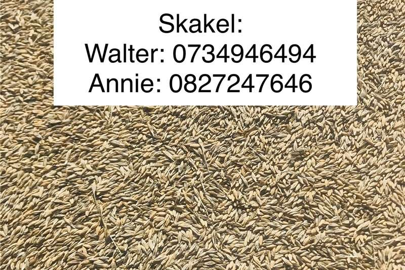 Seeds fertilisers and chemicals Seeds Barley seed