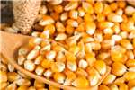 Yellow maize/corn / Dry White Maize Seeds fertilisers and chemicals