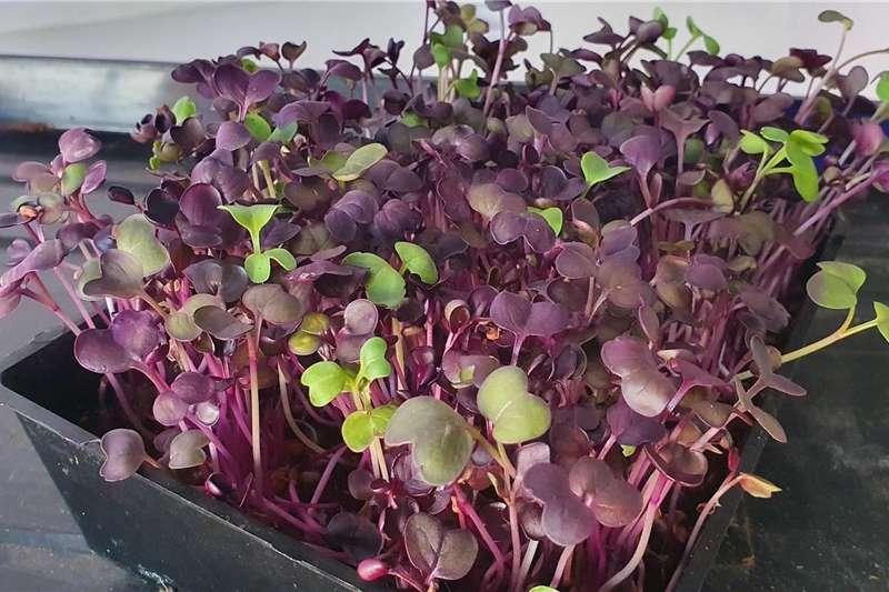 Fresh produce agents MICROGREENS!!! Service providers