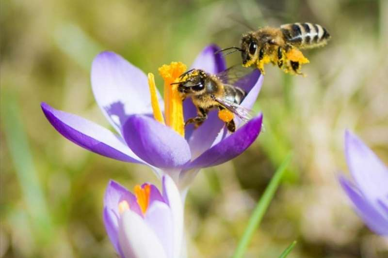 Services Bee Removal