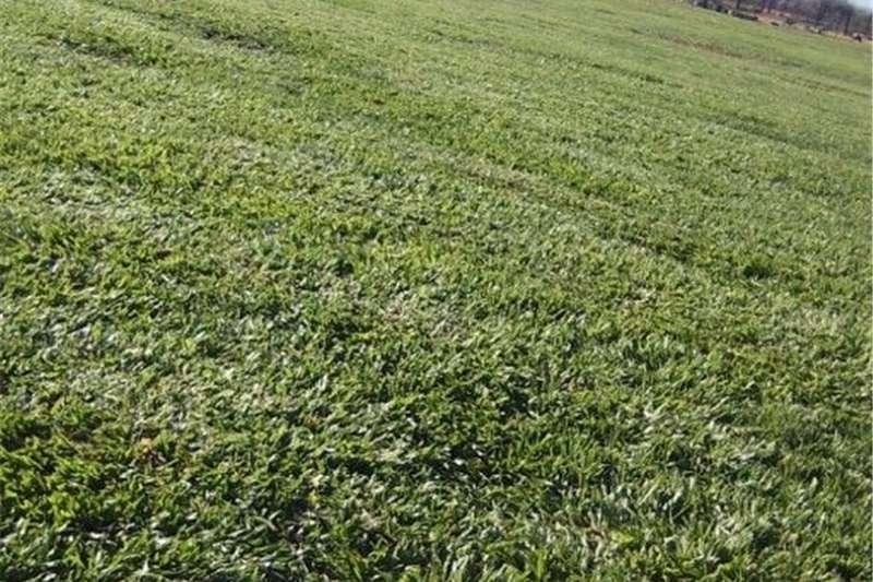 Services Instant lawn Kk for sale