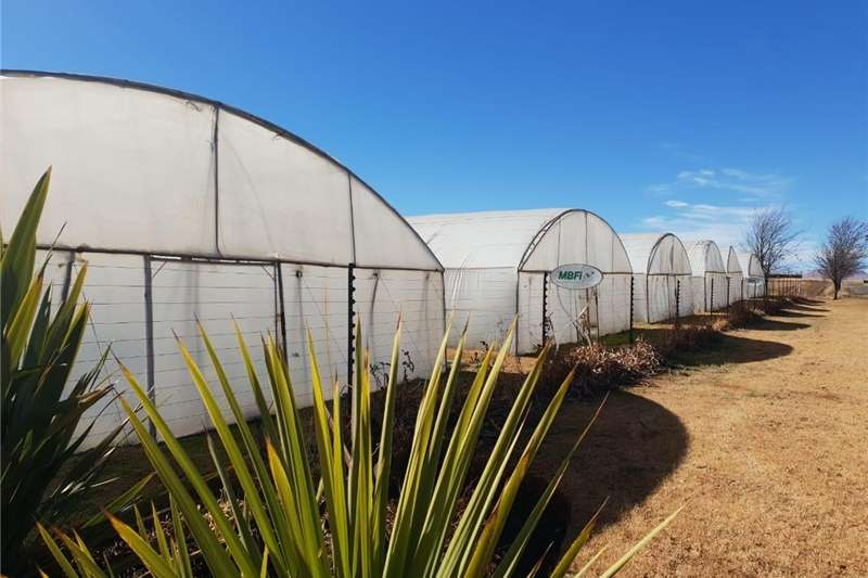 Structures and dams Farm sheds Second hand Greenhouse Structures