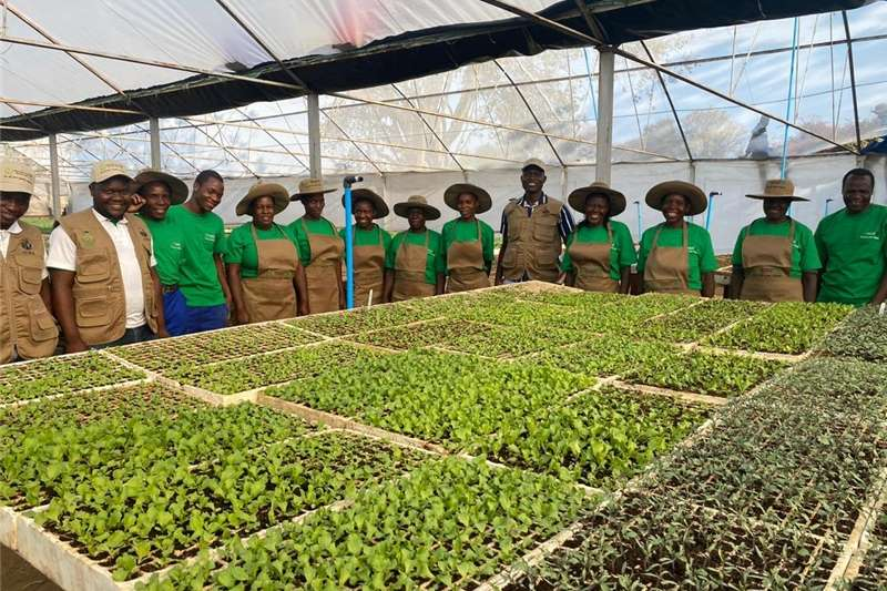Greenhouses VEGETABLE TUNNELS FOR SALE .GREENHOUSE TUNNELS SOU Structures and dams