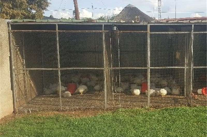 Structures and dams Livestock housing  big cage 6mx5m for sale for birds or chicken  is d