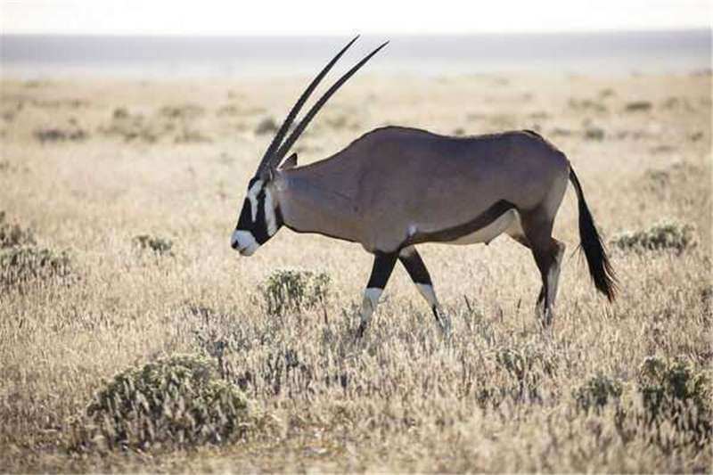 Hunting packages Hunting for the new season special offers you the Wildlife and hunting